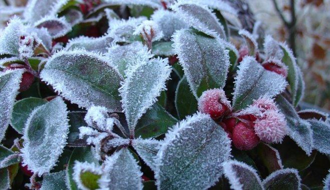 Цветы на балконе зимой: Что сажать и как ухаживать?