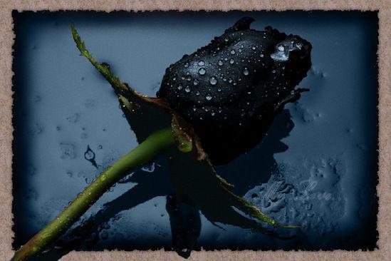 Удивительно красивые чёрные цветы Красота жизни, Чёрные, цветы