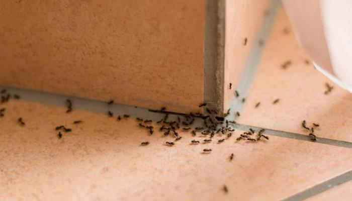 Отличное средство против муравьёв