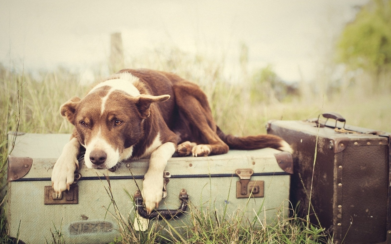 10 историй о том, что преданней собаки нет никого!