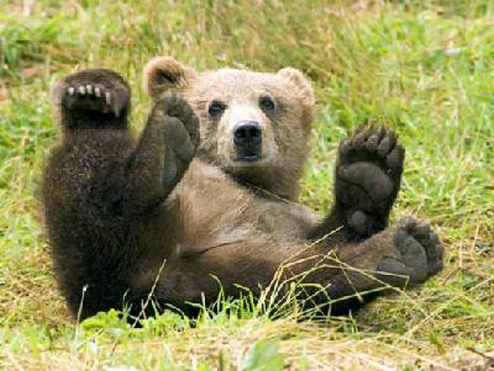 Как медведь не дал семью разрушить