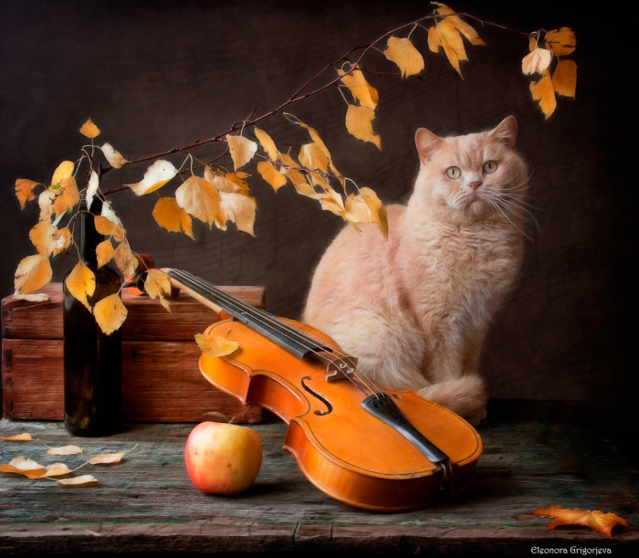 Осенняя мелодия для скрипки с Котом. / Фото: Элеонора Григорьева.