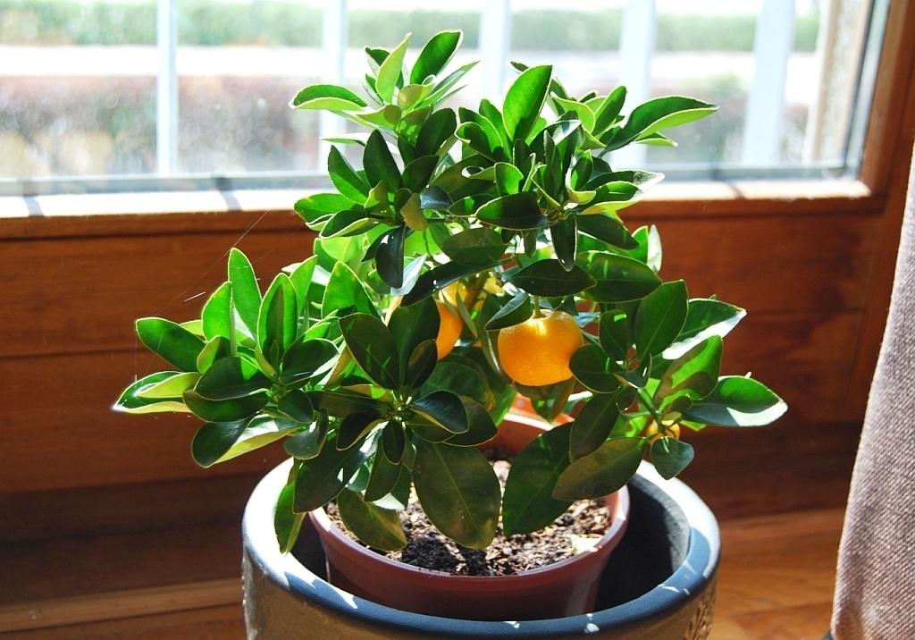 Переносим комнатные растения в дом