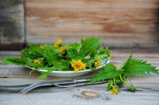 Дикари на кухне. Почему сорняки полезнее культурных растений