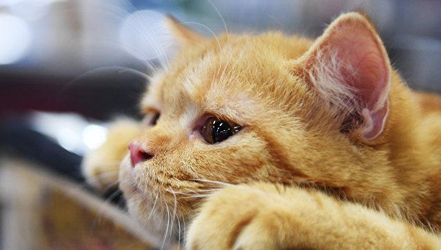 В Благовещенске из театра исчезли ученые кошки