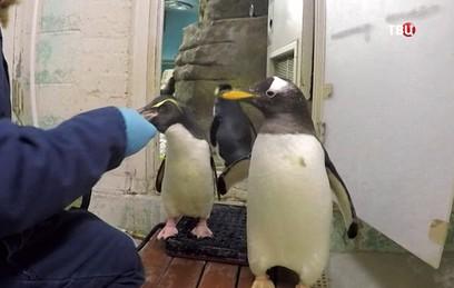 Жадные до рыбы пингвины перехитрили смотрителей зоопарка в США