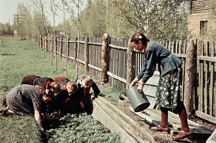 Школьники выращивают помидоры в теплице.