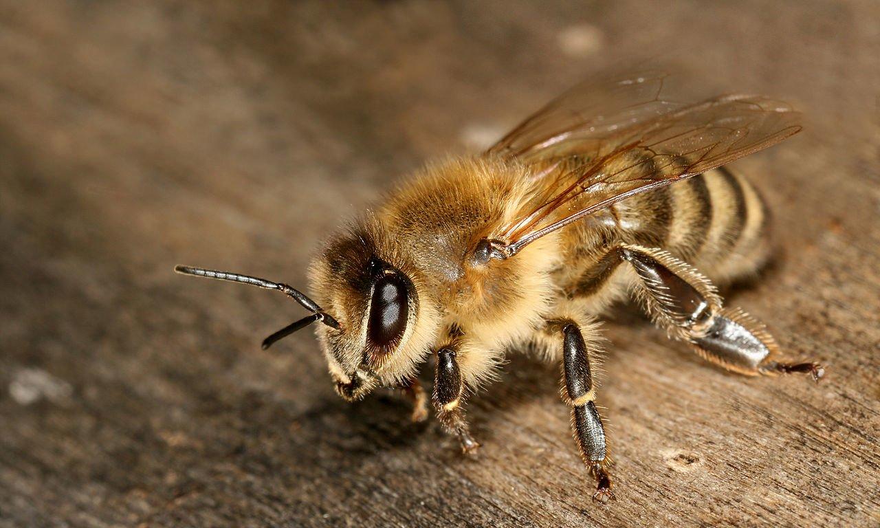 В Китае создали искусственный глаз насекомого