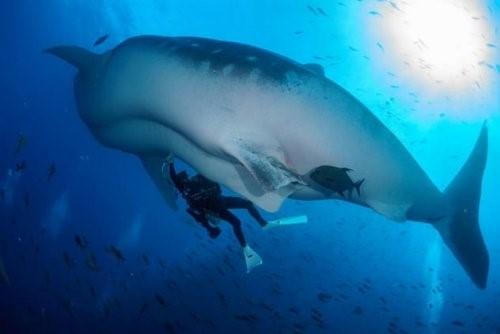 Удивительные факты из истории акул