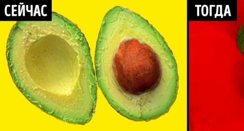 Как выглядели привычные нам овощи и фрукты в древности, до появления селекционеров