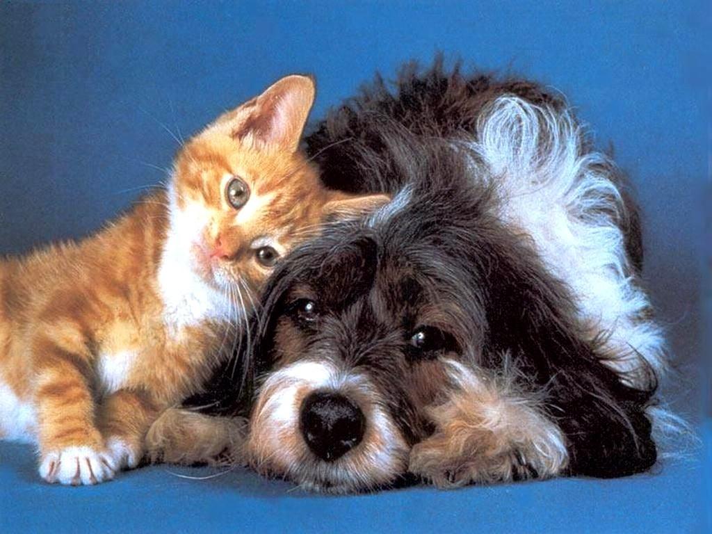 Сколько на самом деле помнят собаки и кошки