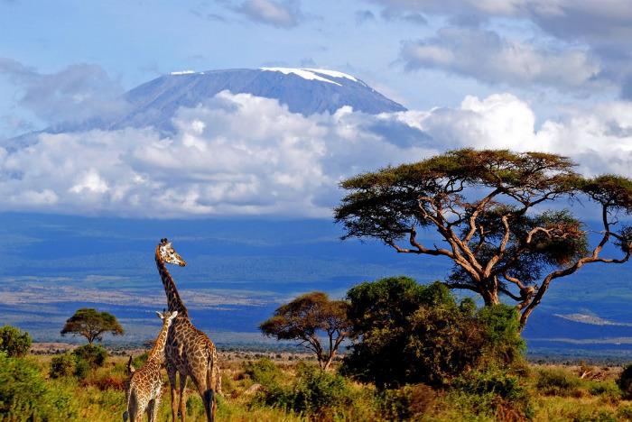 Килиманджаро — самый высокий…