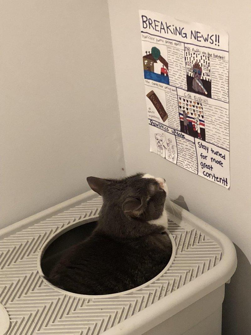 Дети нарисовали кошке газету, чтобы она читала её, когда ходит в туалет