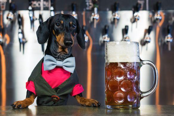 В США начали производство безалкогольного пива для собак