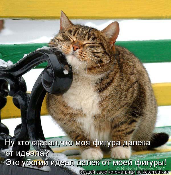 Самый настоящий домопозитив — наши котики во всей своей красе!