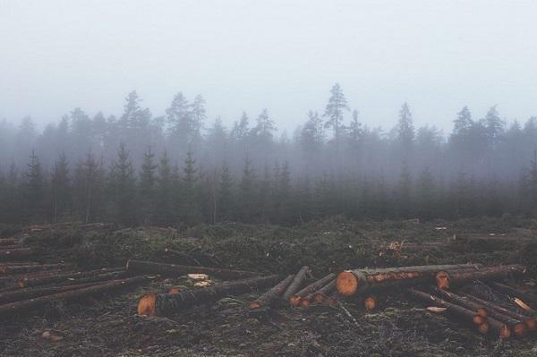 Китайские СМИ назвали Сибирь своей территорией в ответ на бойкот россиян по экспорту леса