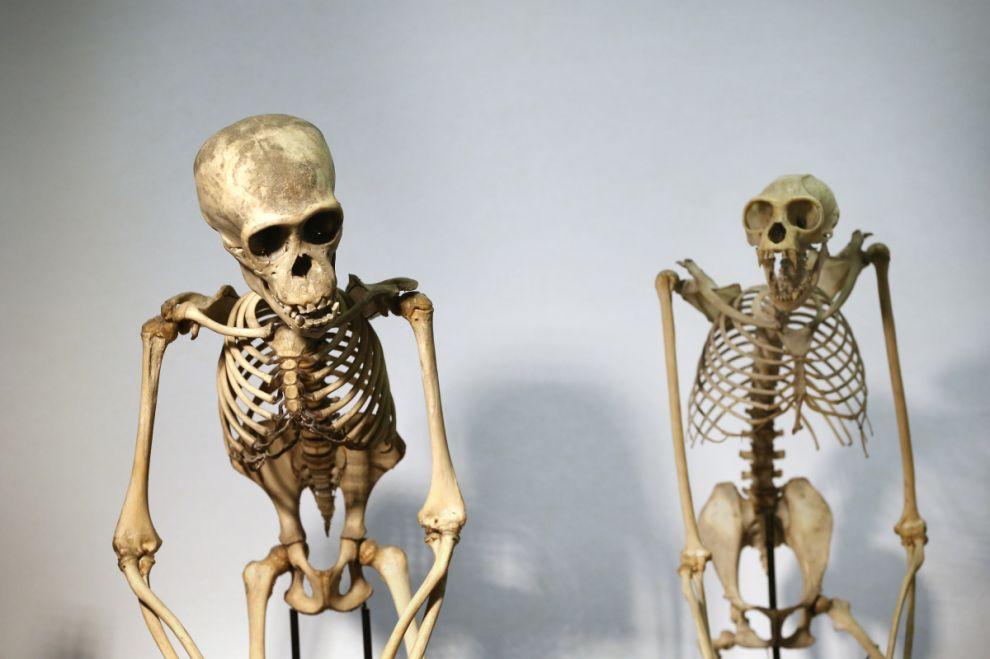 gmoz09 Лондонский музей зоологии и сравнительной анатомии Гранта