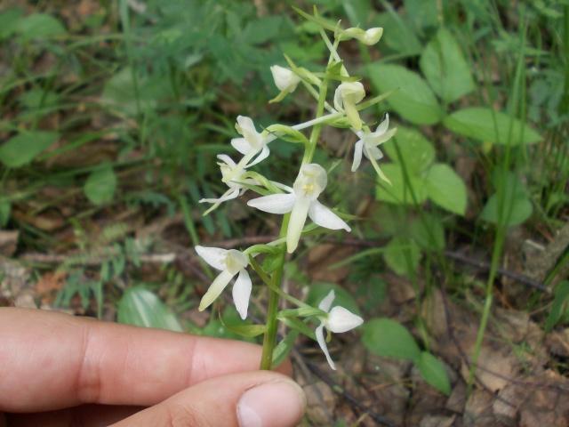 Просмотр темы - Красоты нашей сибирской тайги - omskflower.r…