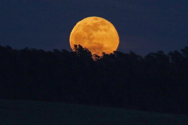 Лунный календарь садовода и …