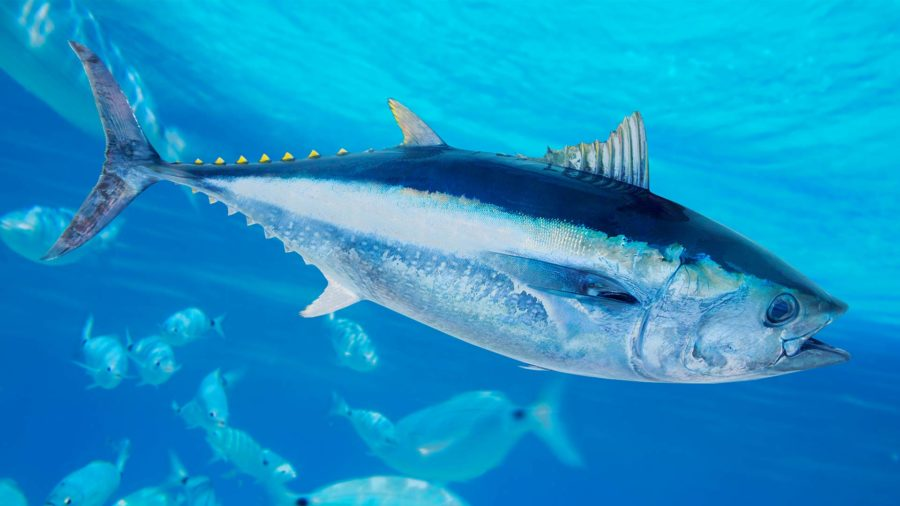 How to Feed Global Demand for Seafood—Without Harming the Ocean