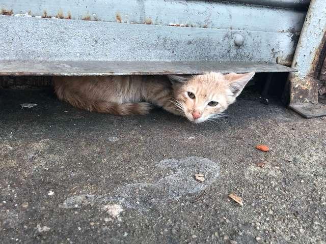 Молодой уличный кот был так …