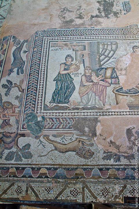 cyprus 32 Мозаики Пафоса   Пафос, Кипр