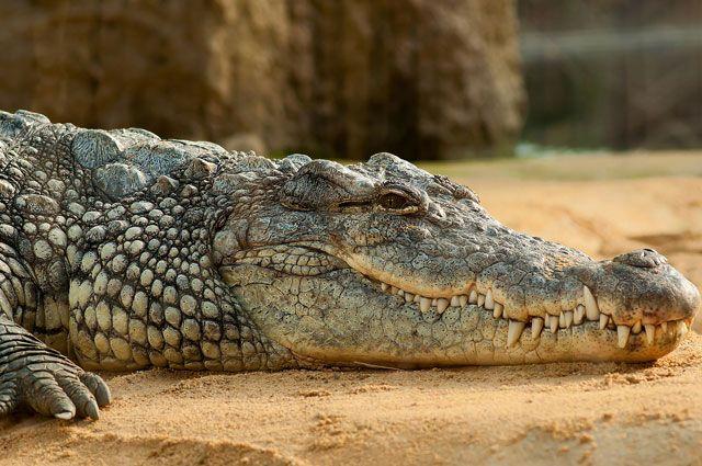 Туристы заметили трехметрового крокодила на одном из пляжей Пхукета