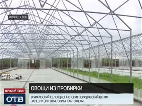 На Урале стартовал проект по импортозамещению картофеля