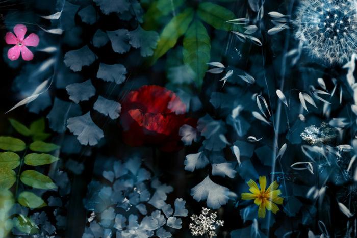 Сквозь листья. Автор: Luis Mariano Gonzalez.