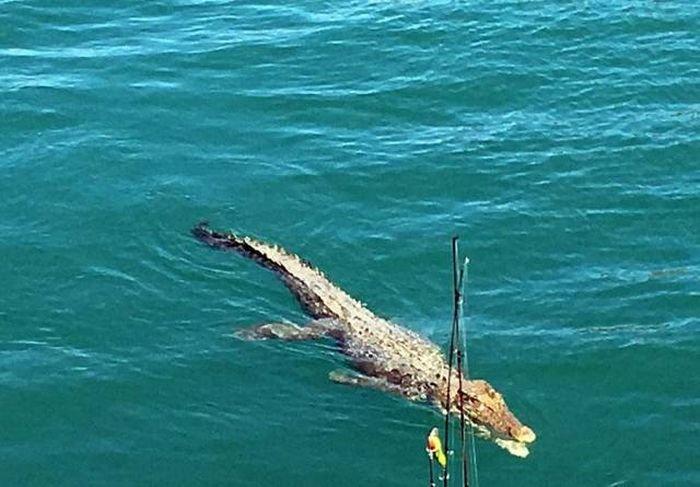 Типичная картина для любителей рыбалки в Австралии