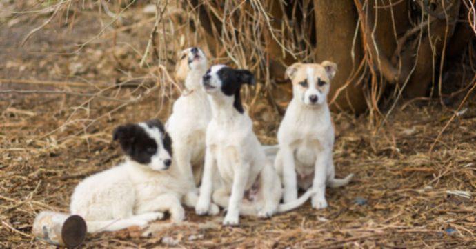 Четыре бездомных пса защищали в лесу маленькое чудо!