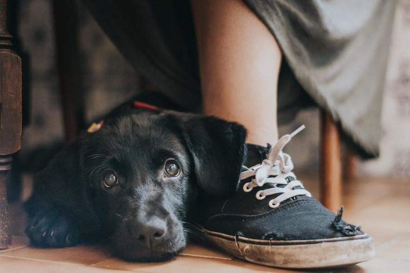 """Гран-прир и 1 место в канегории """"Лучший друг человека"""" - Мария Дэвисон Рамос, Португалия Кеннел клаб, животные, конкурс, лондон, портрет, собаки, фото, фотография года"""