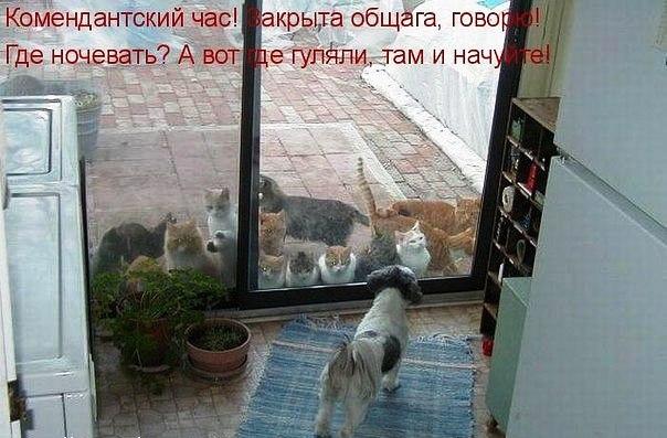 Встреча у ворот