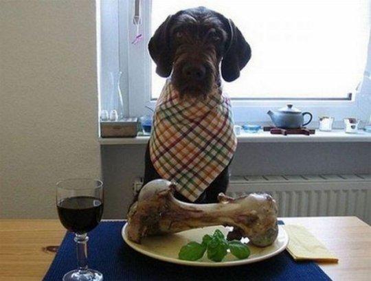 Нужна ли собаке кость?