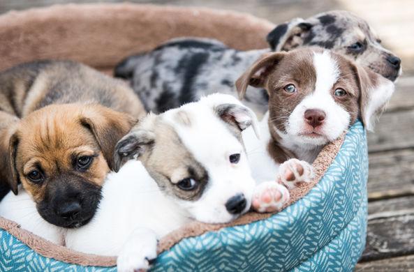 Найдена связь между здоровьем собак и человеческими усами