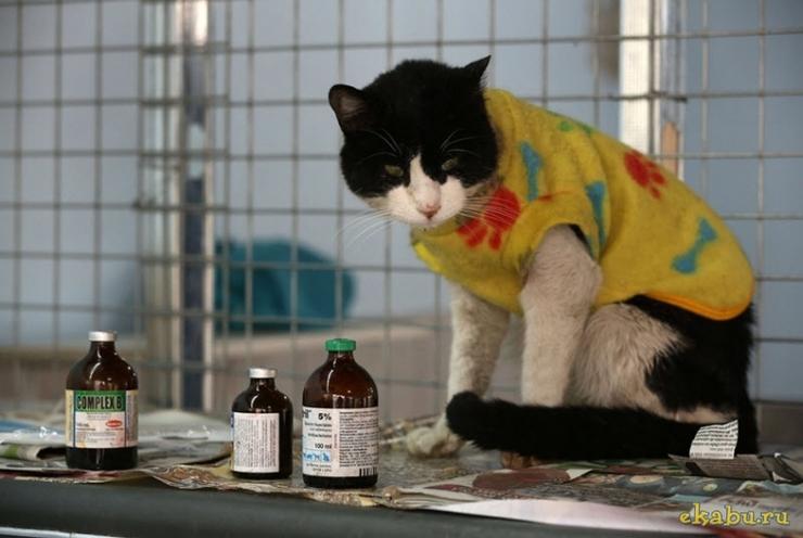 Женщина превратила свой дом в приют для 175 тяжелобольных кошек
