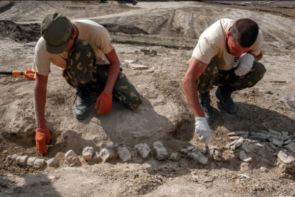 Строители Крымского моста нашли останки доисторического кита