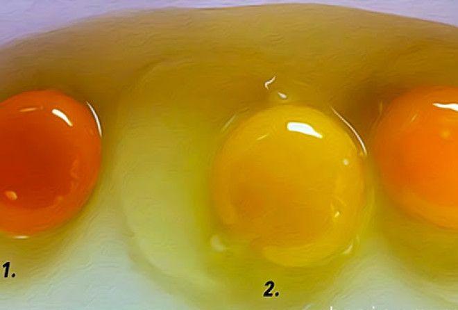 Какое из этих яиц снесла здоровая курица