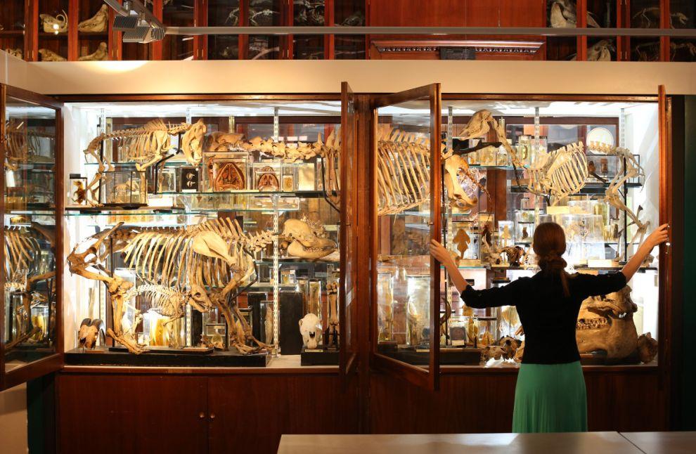 gmoz01 Лондонский музей зоологии и сравнительной анатомии Гранта