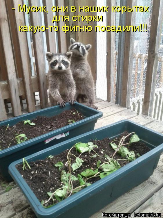 Котоматрица: - Мусик, они в наших корытах для стирки какую-то фигню посадили!!!