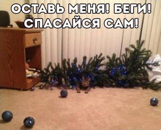 Новогодний юмор с просторов сети                     (25 фото)
