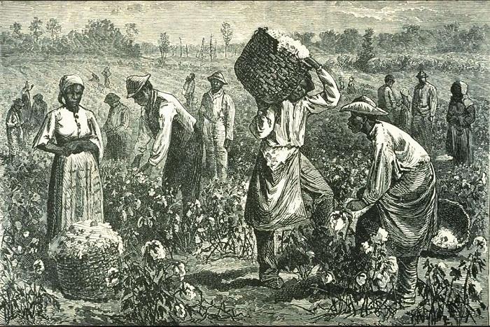 Рабы на сборе хлопка (Юг США, 1873 год)