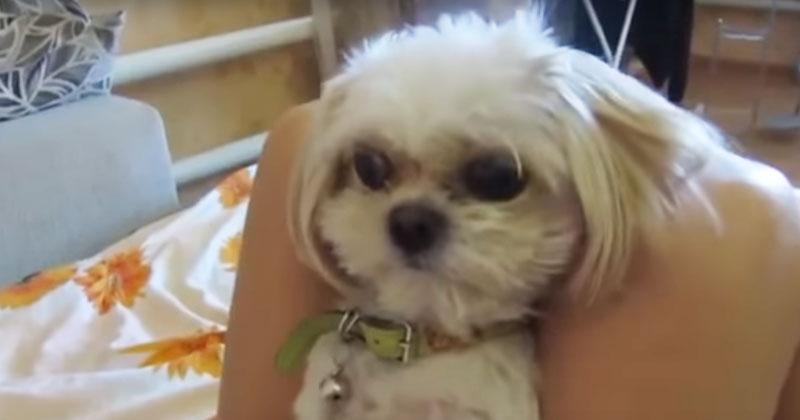 Реакция собачки рассмешила весь интернет, и он стал звездой! «Боня, твою котлету сьели!»