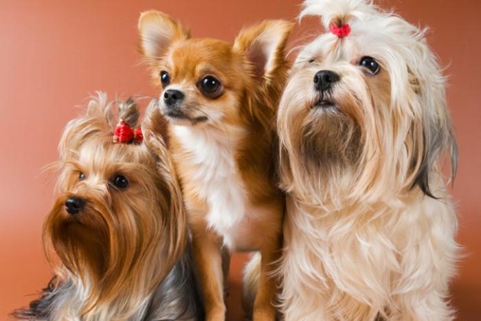 10 идеальных пород собак для содержания дома
