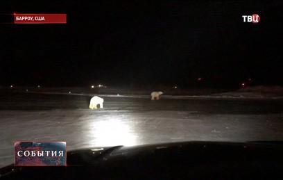 Медведи вышли на взлетную полосу аэропорта на Аляске