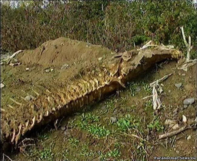 В Азербайджане найден странный скелет