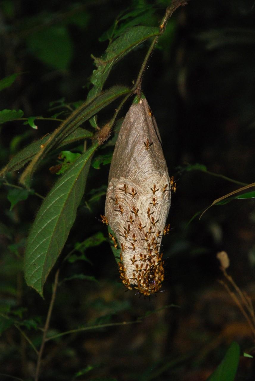 Сожительство насекомых и растений