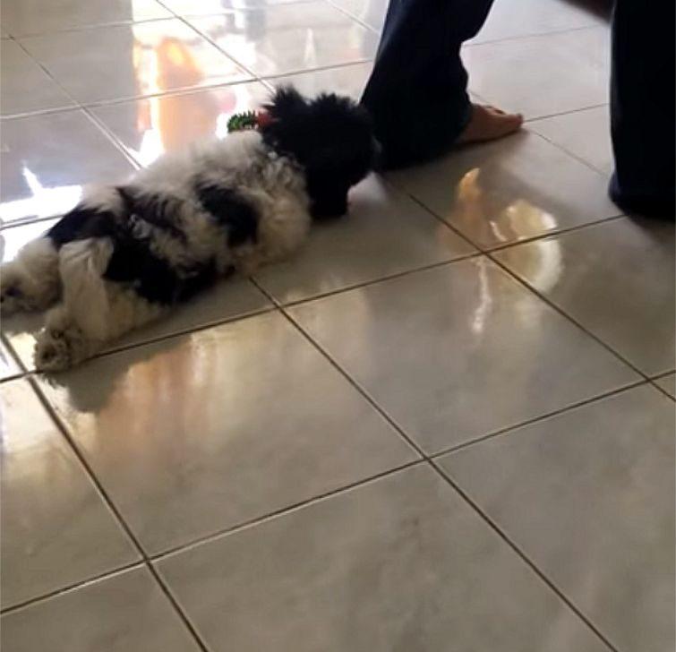 Эта собака нашла способ всегда оставаться со своим хозяином