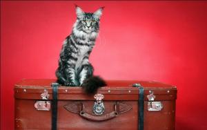 Переезд в новый дом. Вот 7 способов облегчить переезд для вашей кошки.