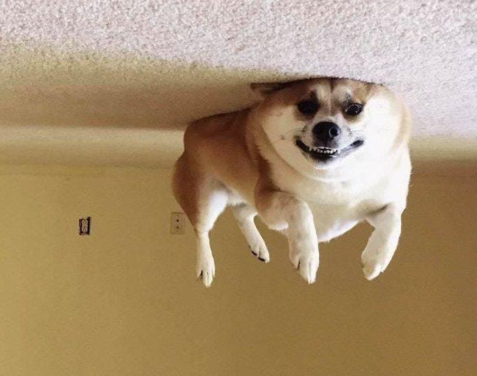 В интернете заметили, что переворачивать фотки собак, лежащих на полу — крутая идея. И тут понеслось...